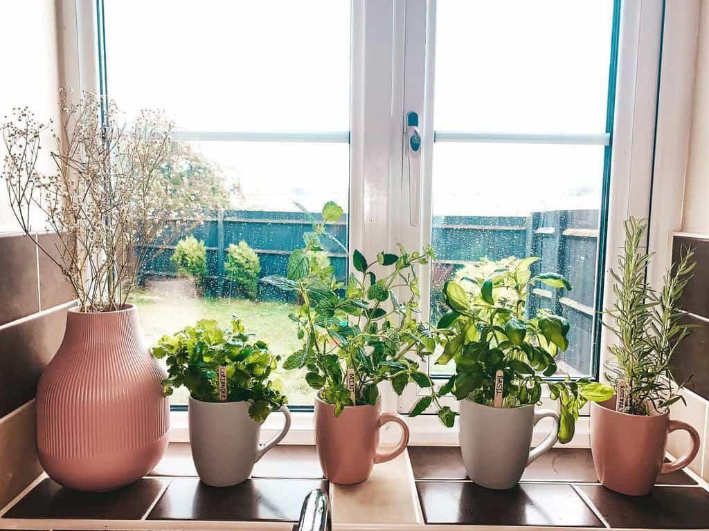 easy-indoor-herb-garden-ideas-happyhealthyhevs-1268636