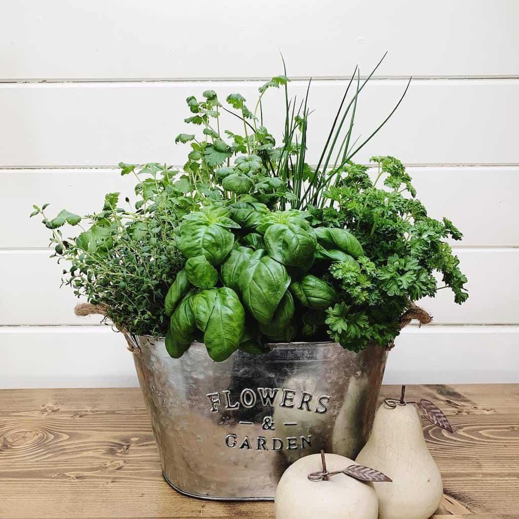 easy-indoor-herb-garden-ideas-whitefencefarms-1198349