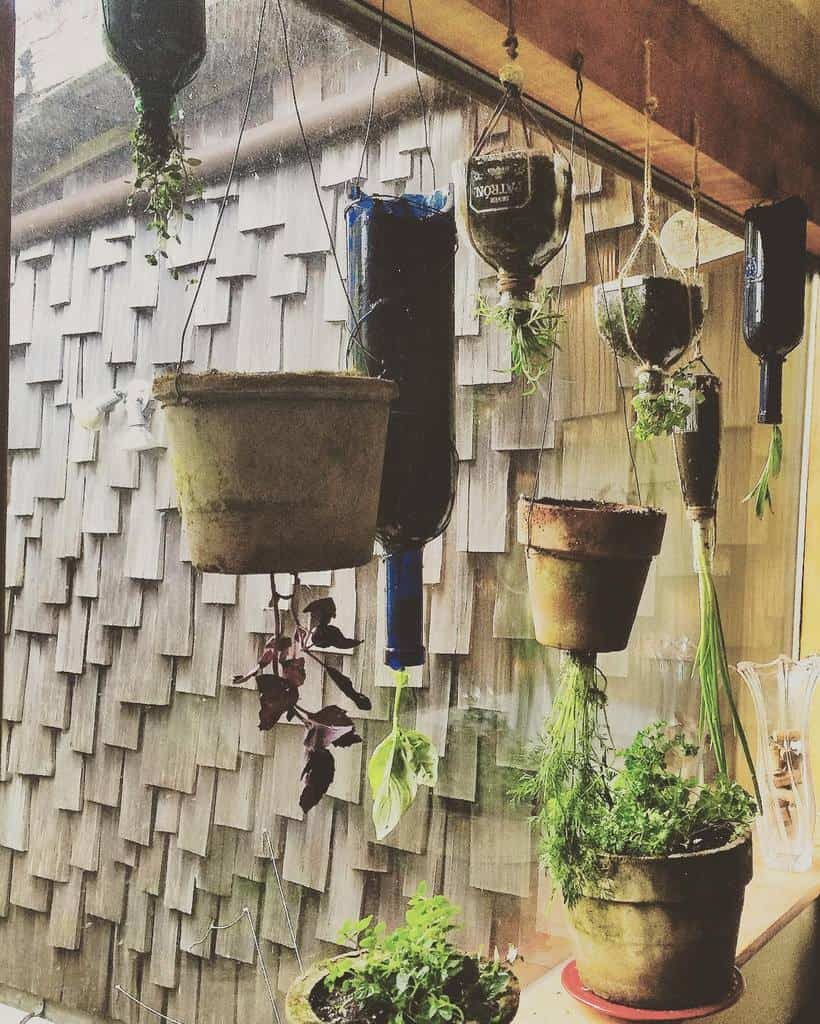hanging-indoor-herb-garden-ideas-sophiathayer-4180613