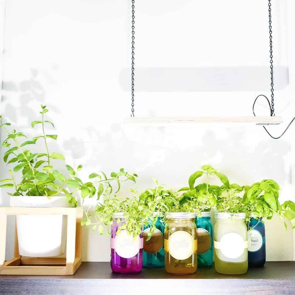 hydroponics-and-aquaponics-indoor-herb-garden-ideas-b-a-gorgie-7838133