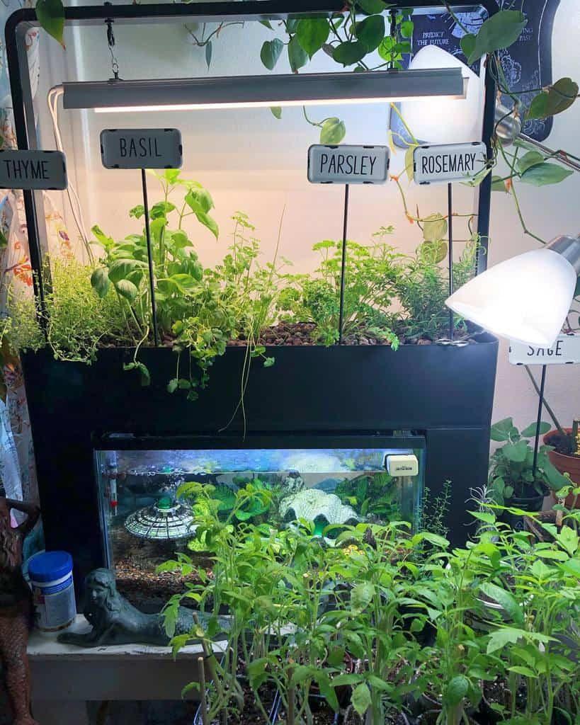 hydroponics-and-aquaponics-indoor-herb-garden-ideas-druid-witchelf-8161746