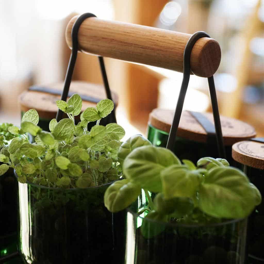 hydroponics-and-aquaponics-indoor-herb-garden-ideas-fourstorelondon-1099309