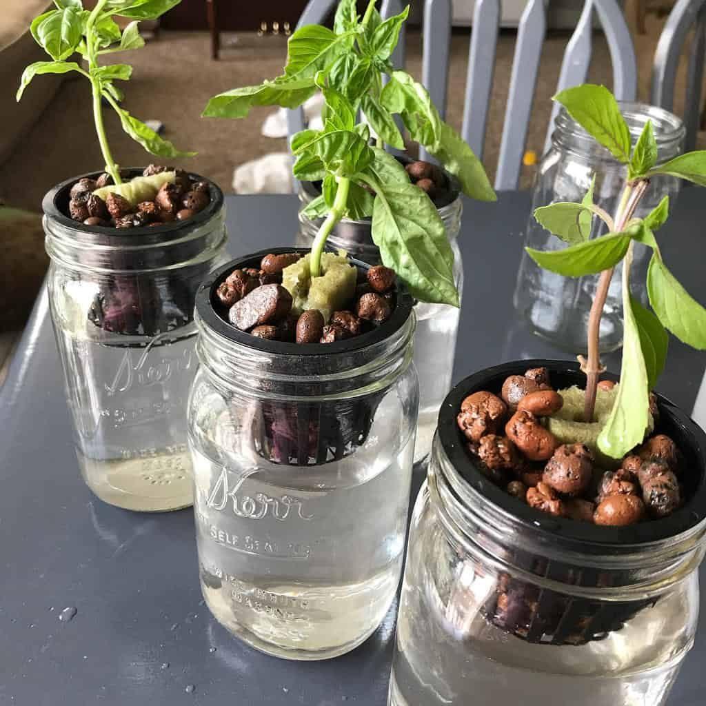 hydroponics-and-aquaponics-indoor-herb-garden-ideas-homesteadingbutnot-4194818