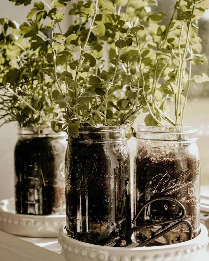 kitchen-indoor-herb-garden-ideas-ashleyywillis-7007986