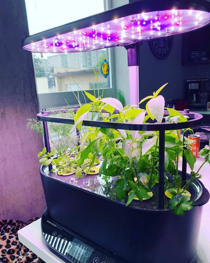 modern-indoor-herb-garden-ideas-onneena-4856863
