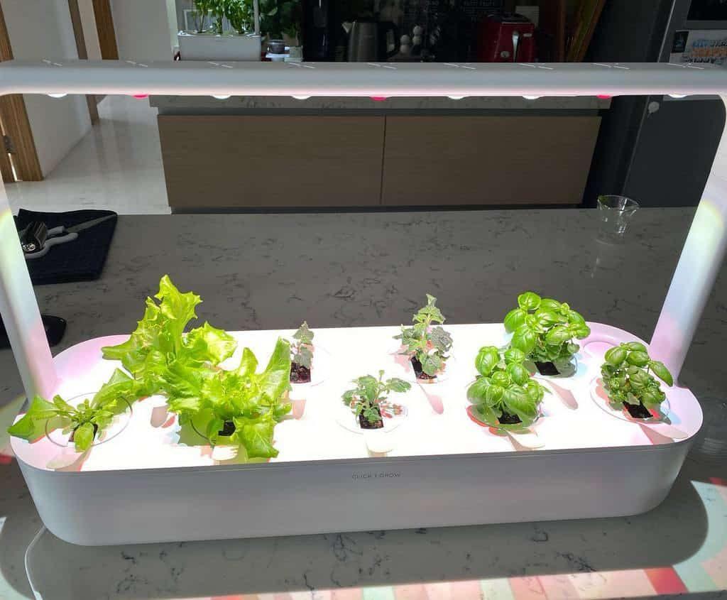 modern-indoor-herb-garden-ideas-rajabweightloss-1820767
