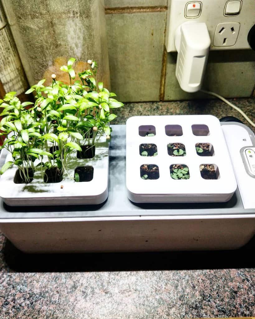 modern-indoor-herb-garden-ideas-the_no_waste_farmer-5359095