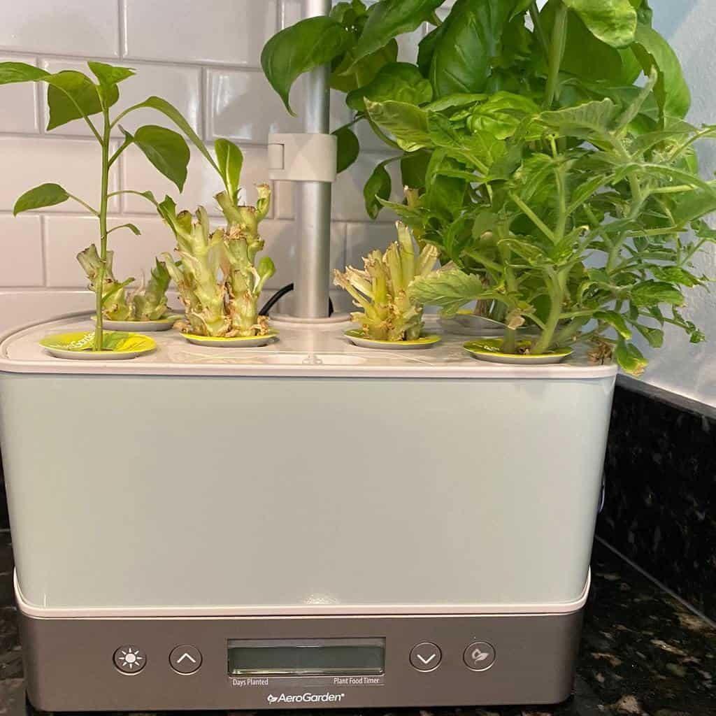 modern-indoor-herb-garden-ideas-thepinnacleteam-2483900