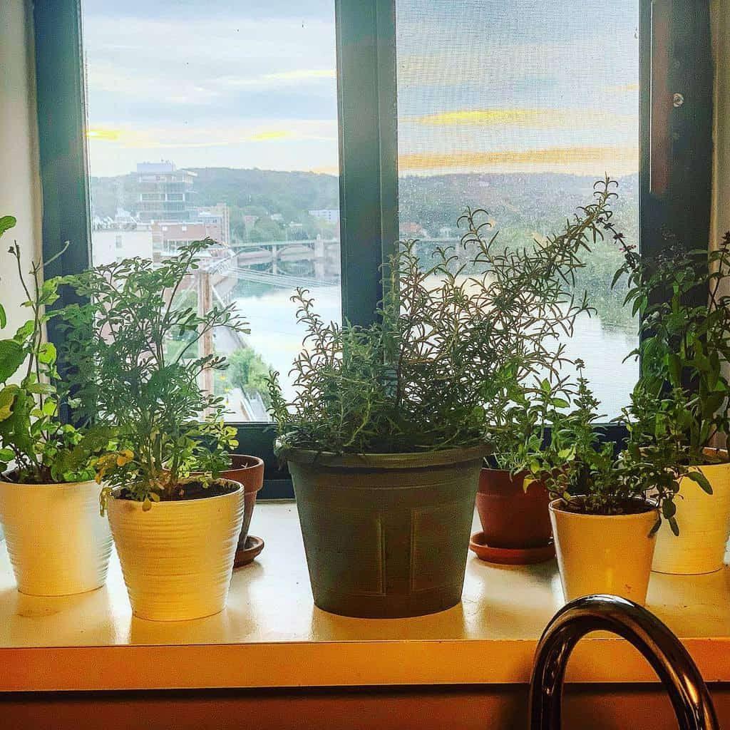 potted-indoor-herb-garden-ideas-chefrichardhebson-1405912