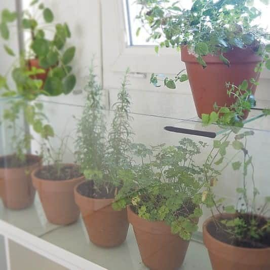 potted-indoor-herb-garden-ideas-savedtogether-8675527