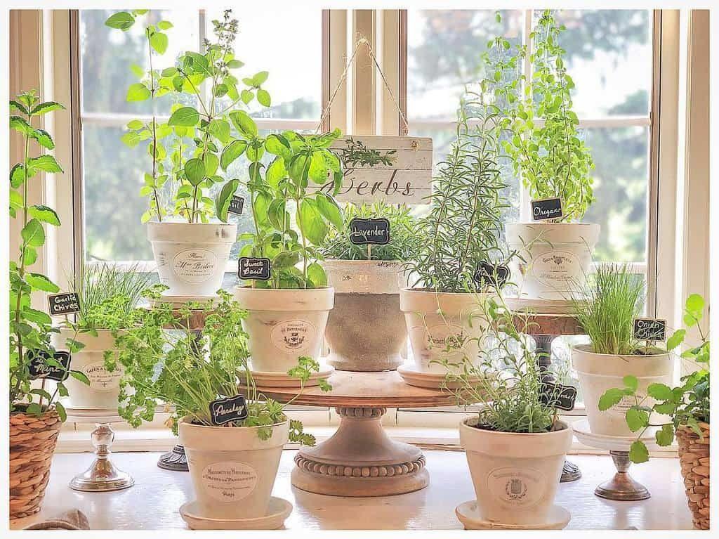 potted-indoor-herb-garden-ideas-vaughnhillhome-7585620