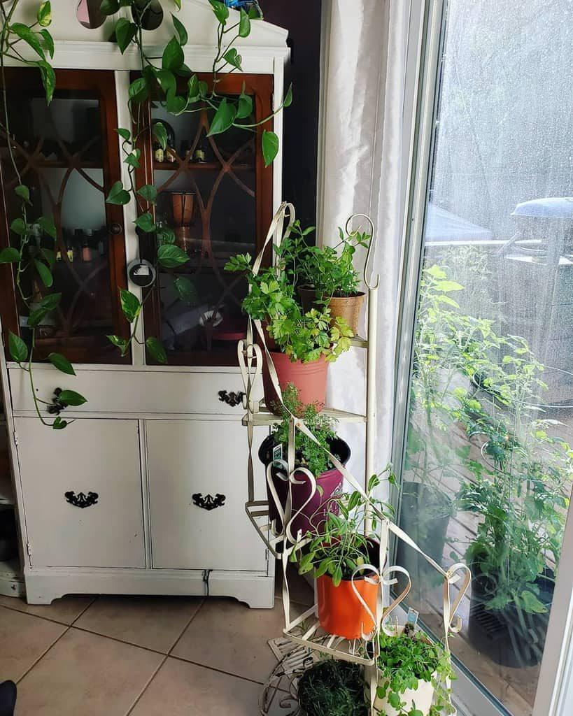 vertical-indoor-herb-garden-ideas-allisonshaer-9540721