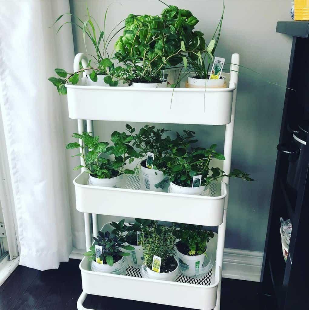 vertical-indoor-herb-garden-ideas-droolinwithpoulin-5305955
