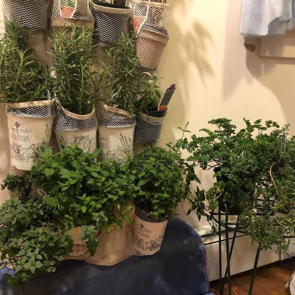 vertical-indoor-herb-garden-ideas-steph_wemet-2223476