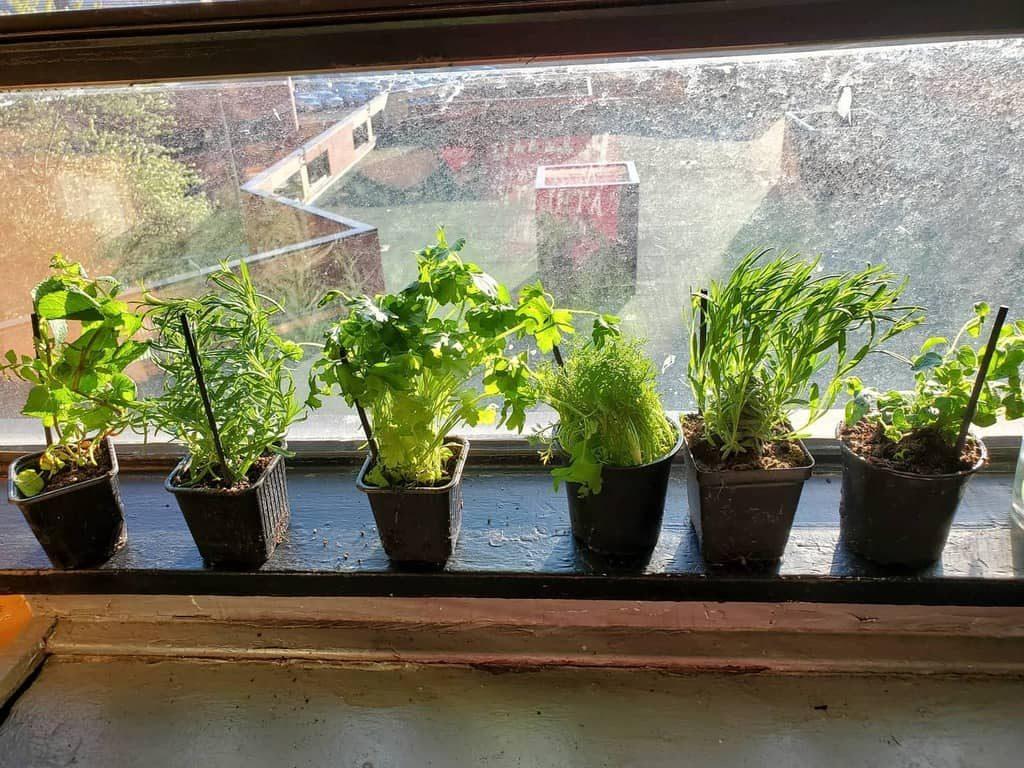 window-indoor-herb-garden-ideas-4thcourse-8868991