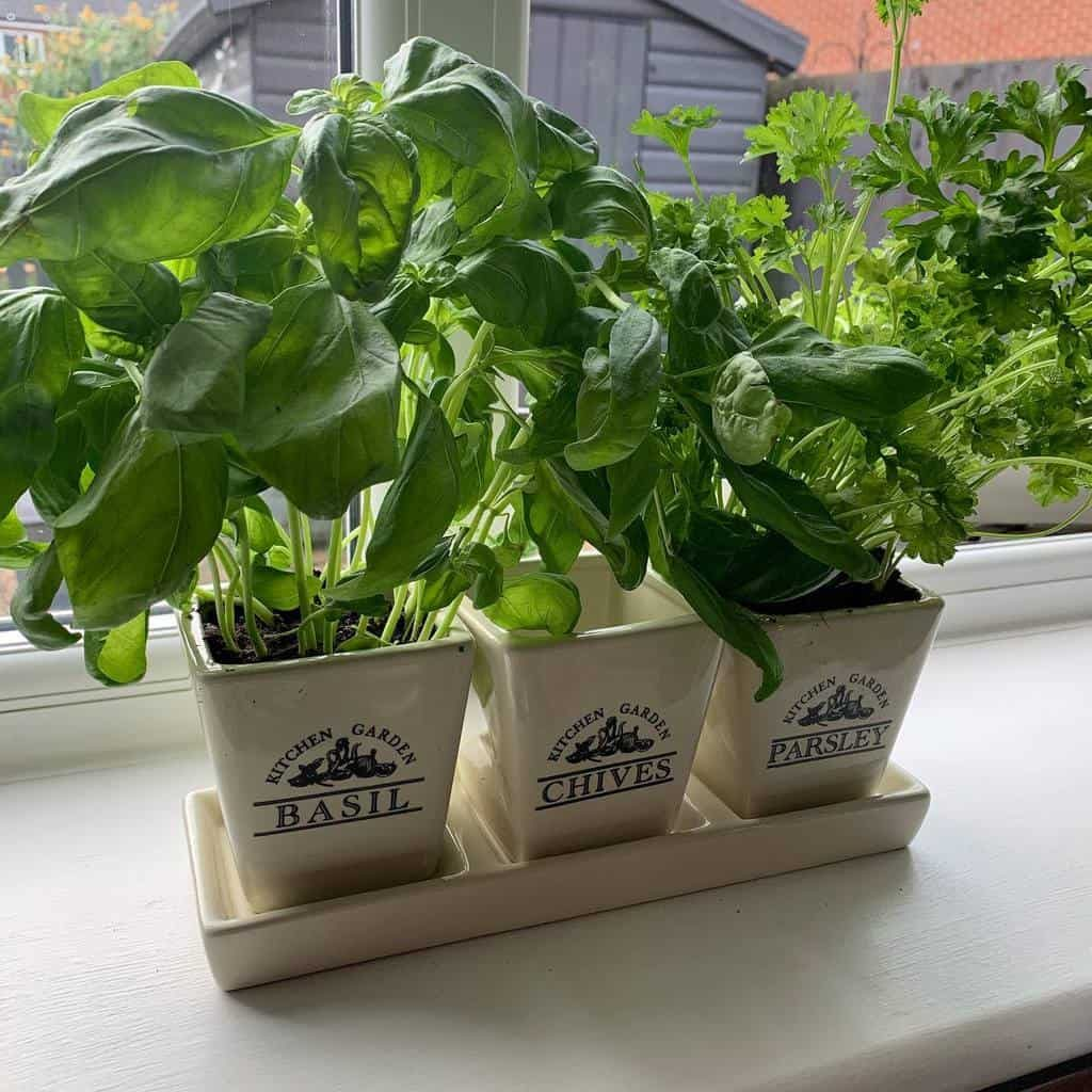window-indoor-herb-garden-ideas-at_home_with_rosy-8755974