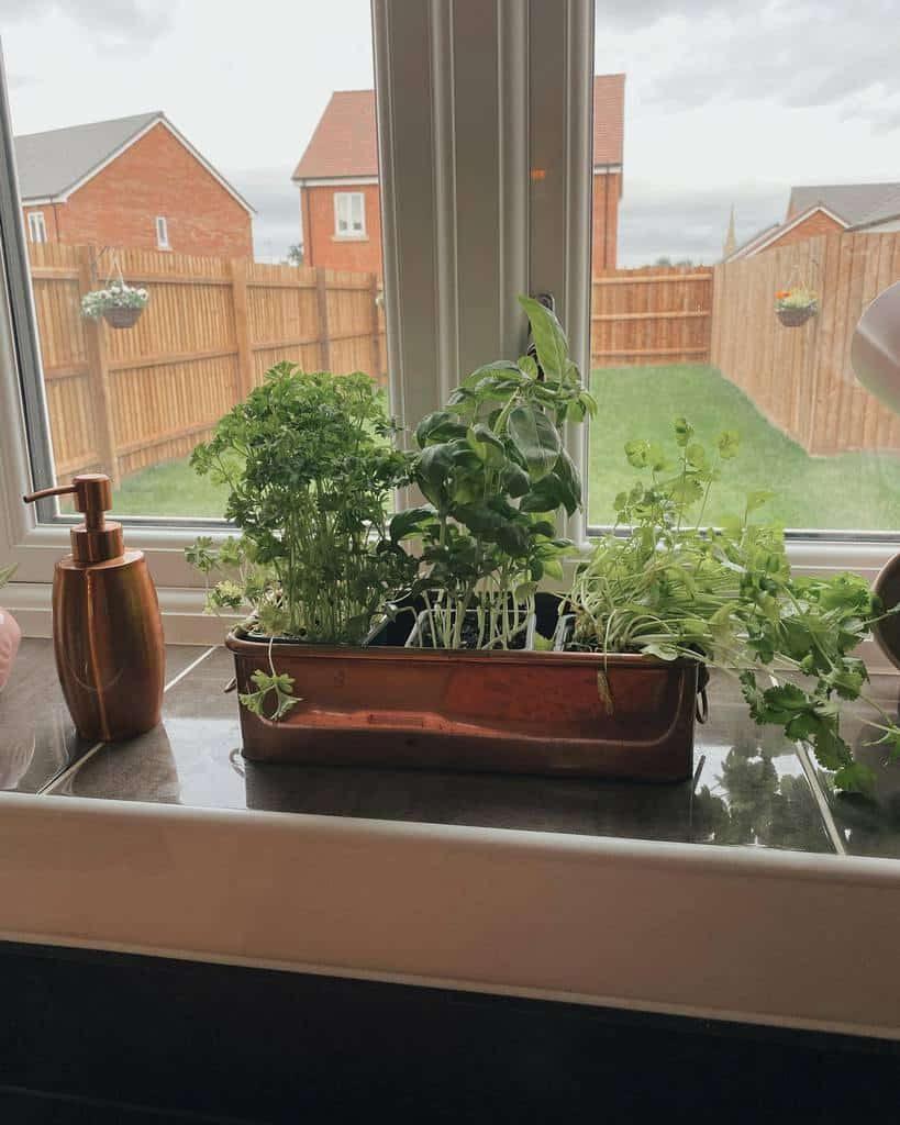 window-indoor-herb-garden-ideas-home_on_hamiltonroad-3504344