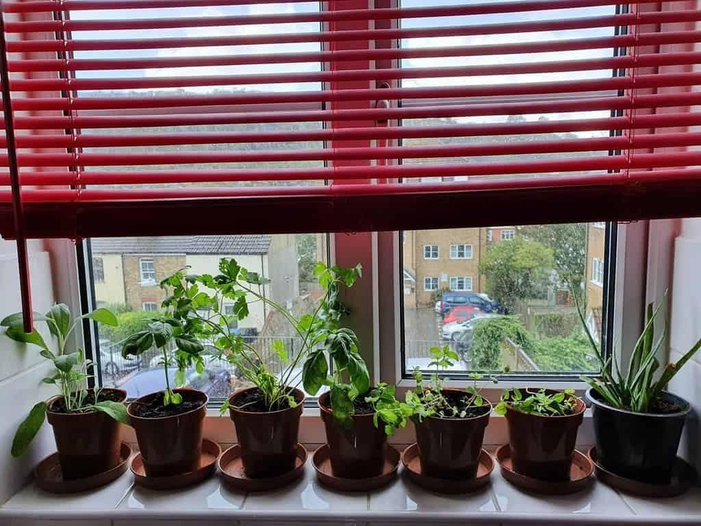 window-indoor-herb-garden-ideas-katy_hippycrystalvibes-6149362