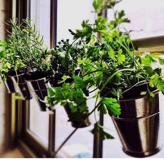 window-indoor-herb-garden-ideas-kikajunqueira-com_-br_-9856480