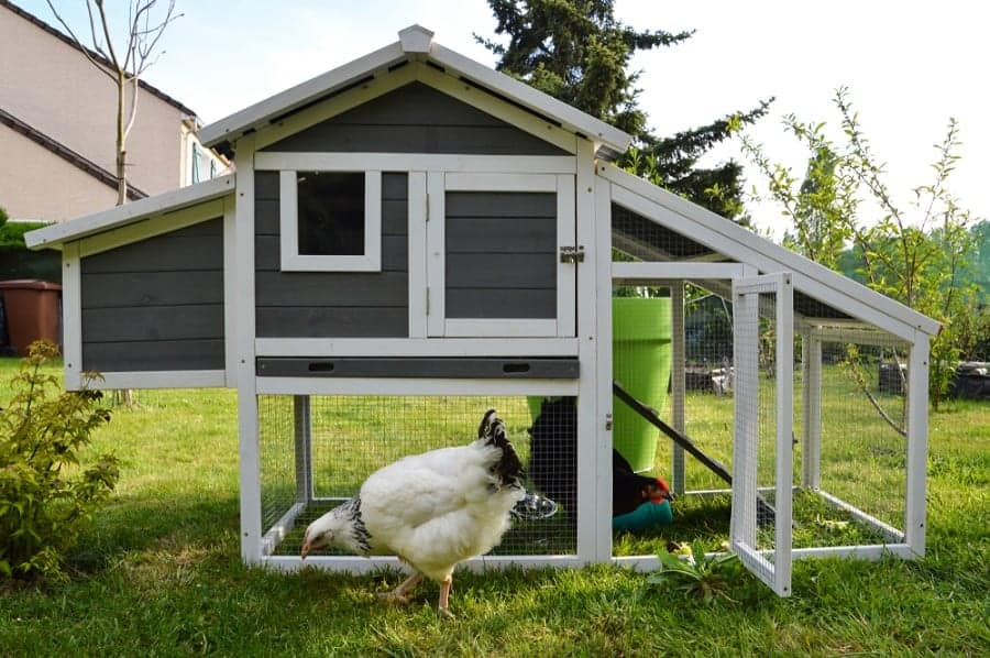 The Top 52 Chicken Coop Ideas