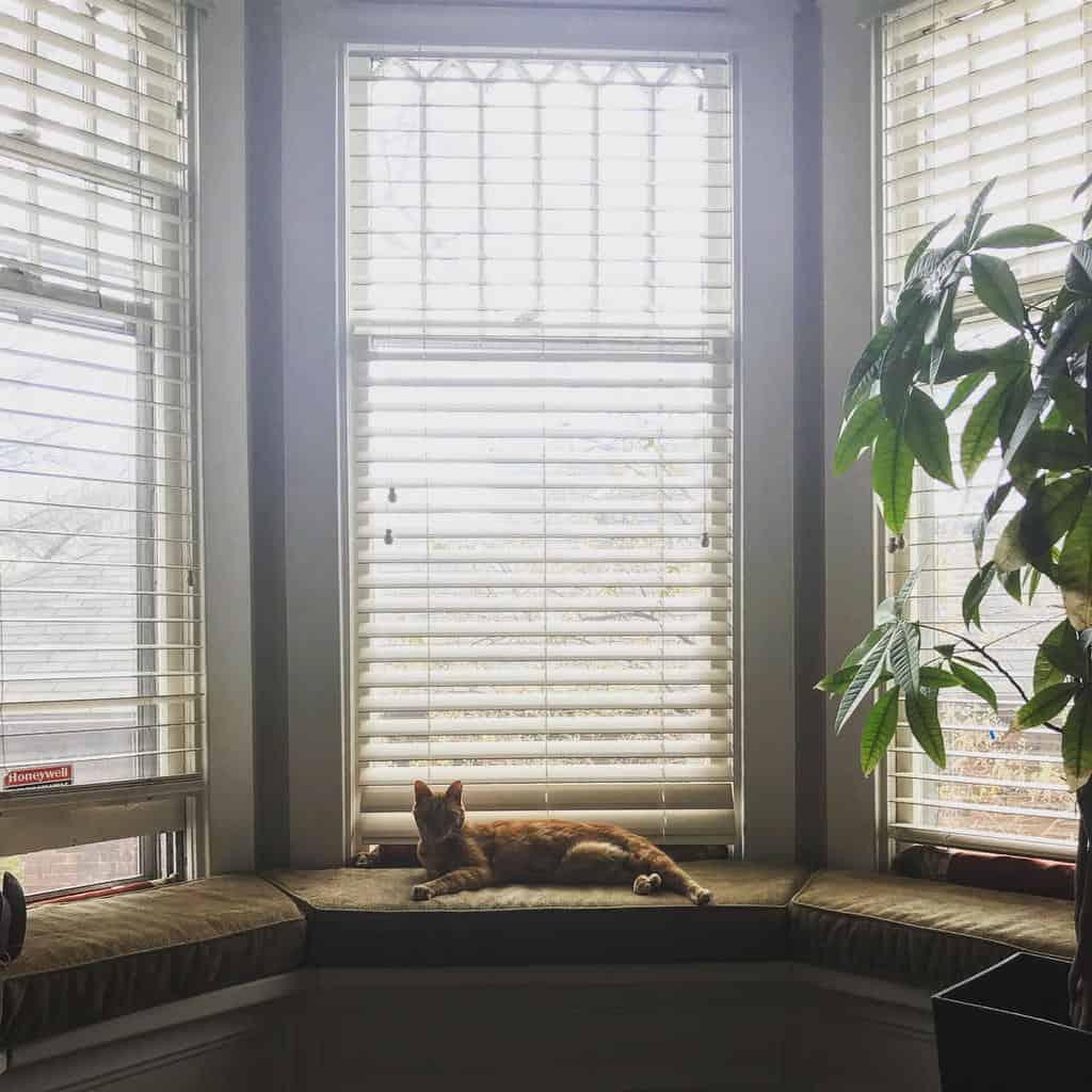 Shutters Bay Window Ideas -nightanddaydecor