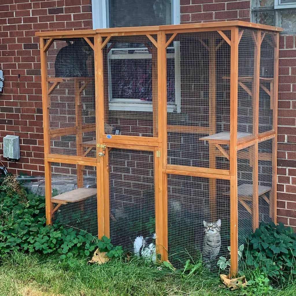 Backyard Catio Ideas -pumpkinspice_magicmice