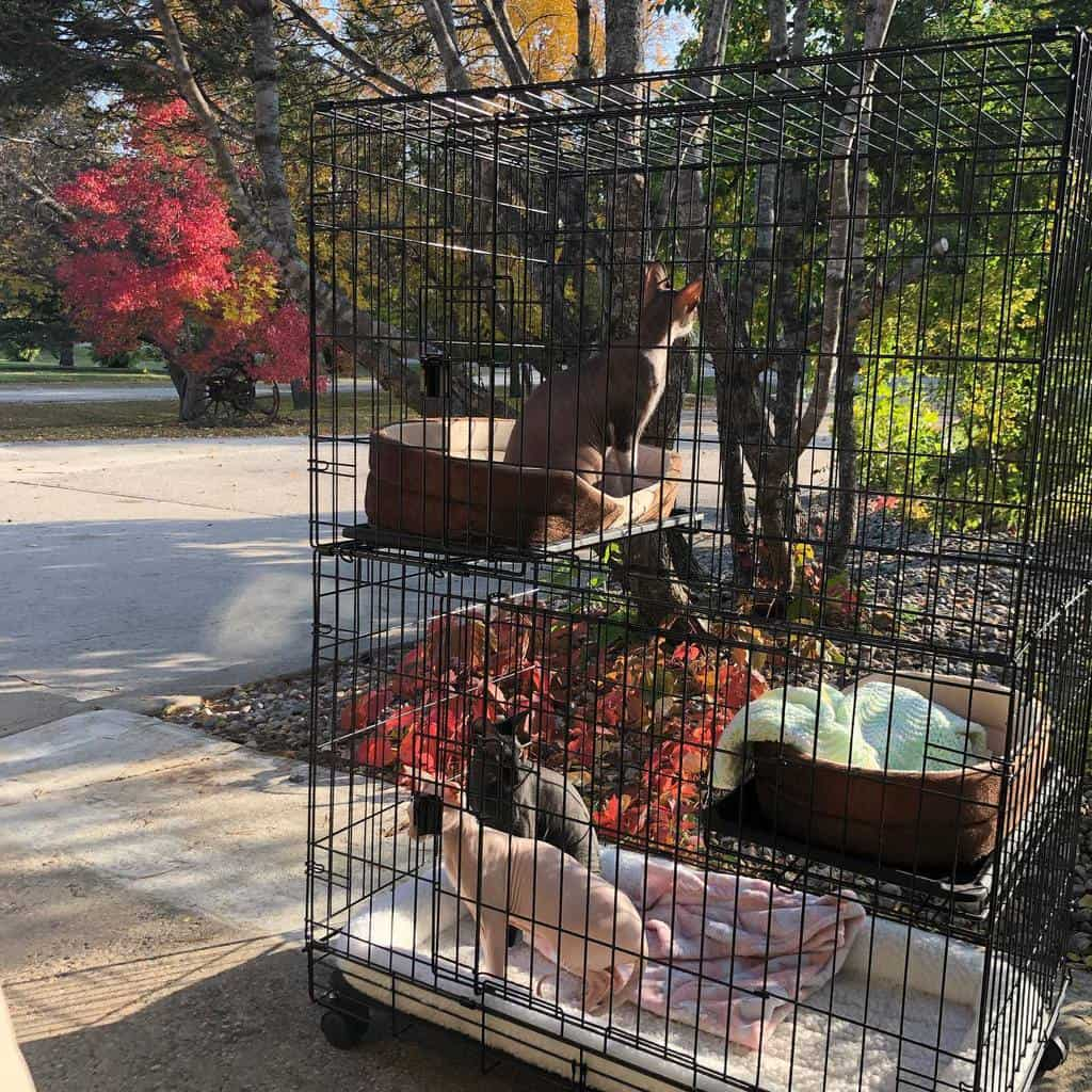 Cage Catio Ideas -princehairypeterbald