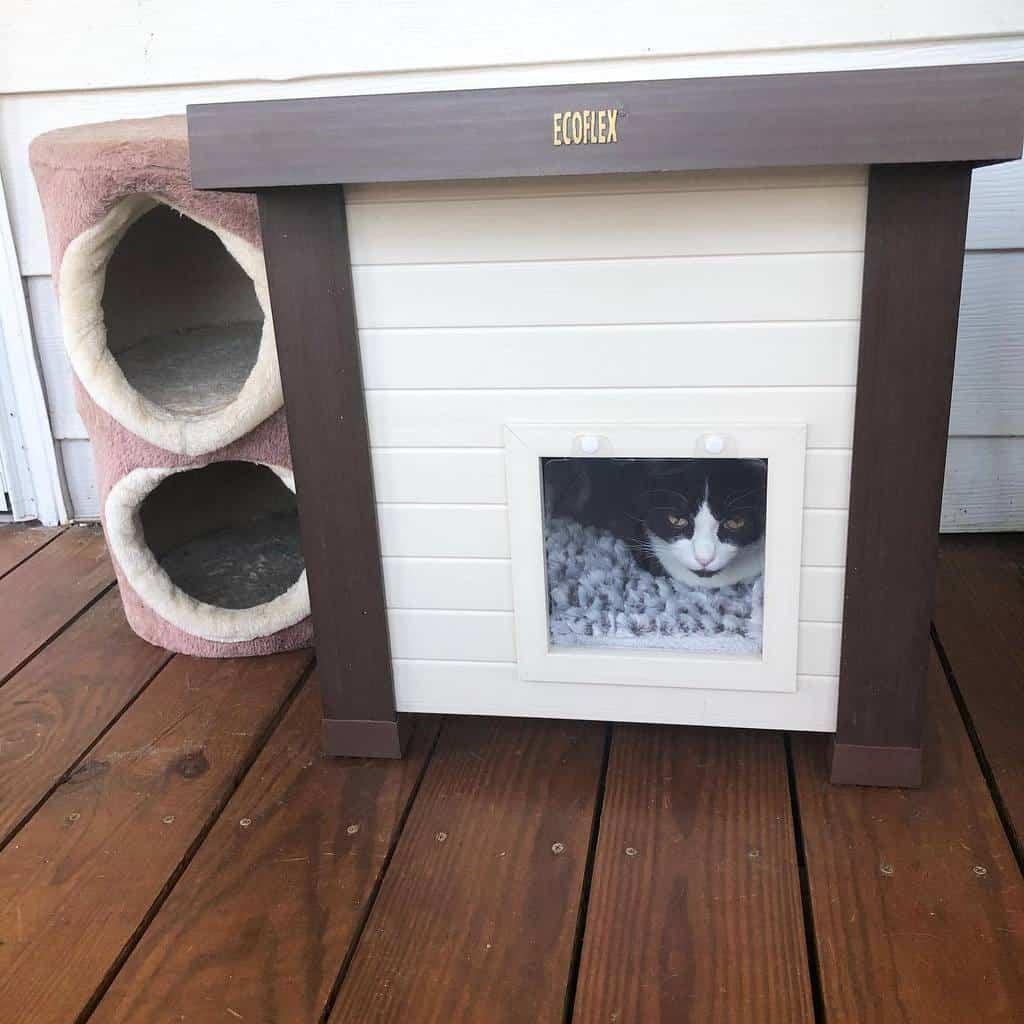 Cat House Catio Ideas -jocelynfreeman