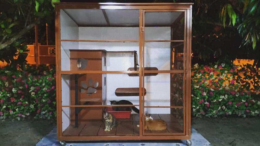 Enclosure Catio Ideas -catcage2020
