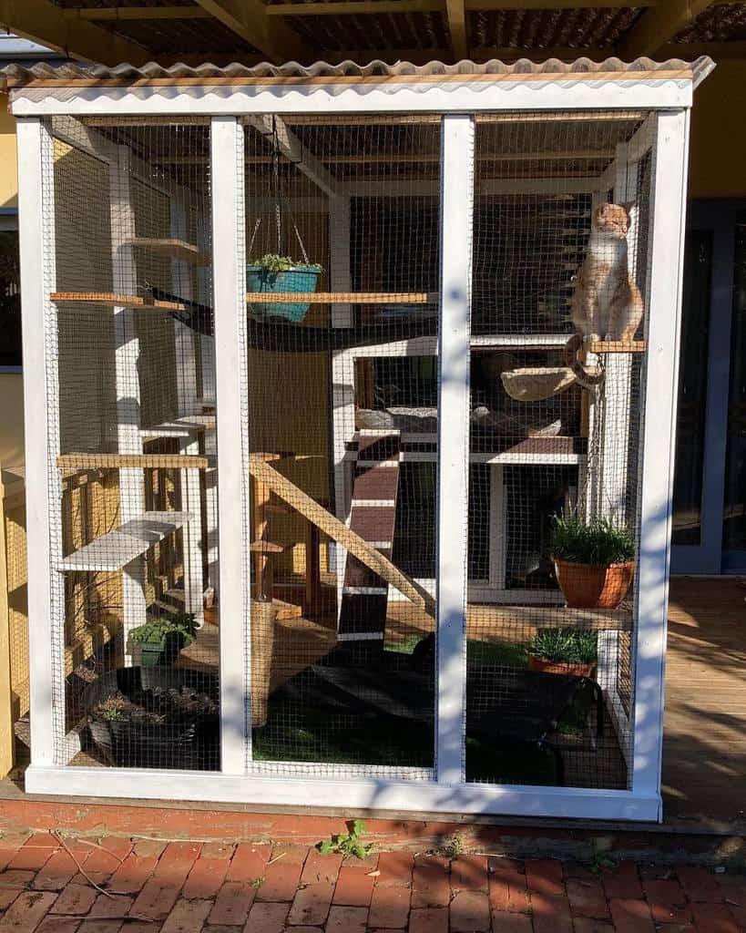 Enclosure Catio Ideas -ela_blu_kitty_cats