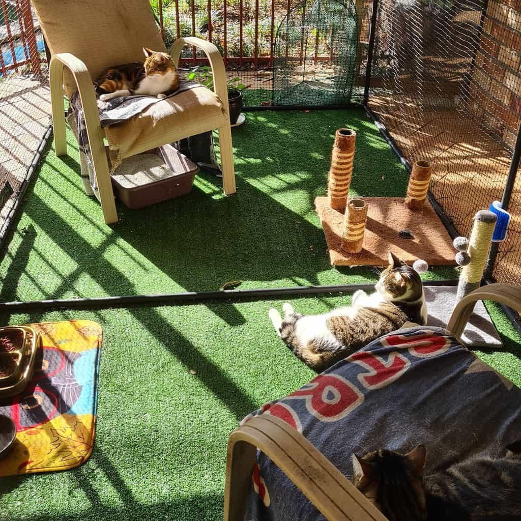 Enclosure Catio Ideas -thenonchalantcat