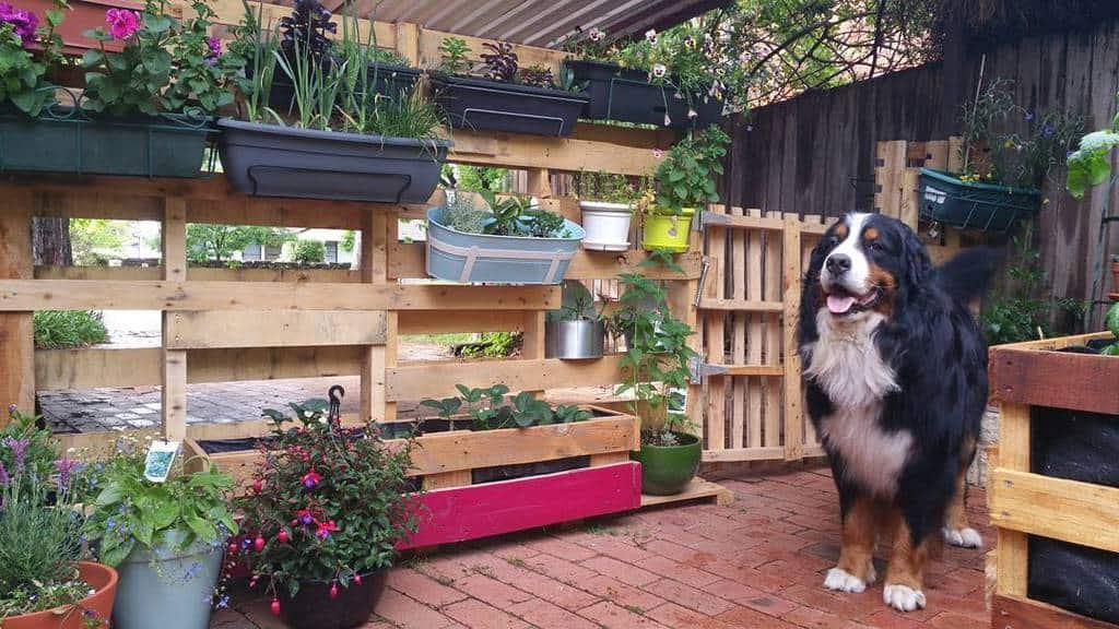 Garden Pallet Fence Ideas -crix_the_wonder_bear