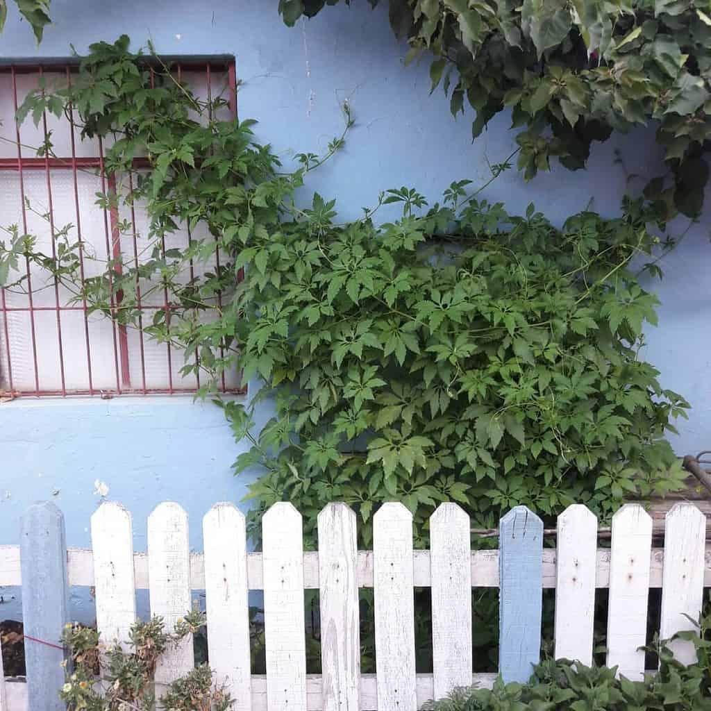Picket Pallet Fence Ideas -training_allama