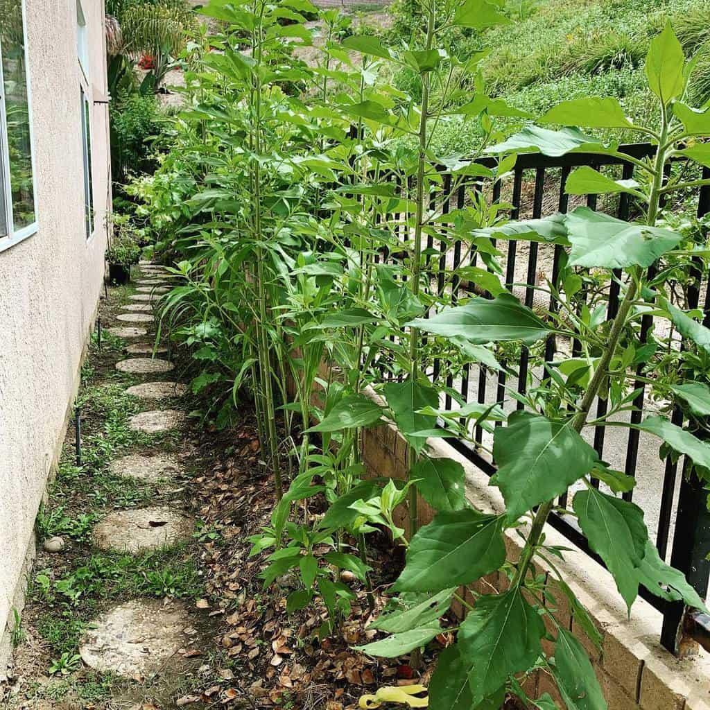 Small Side Yard Ideas -naturengarden