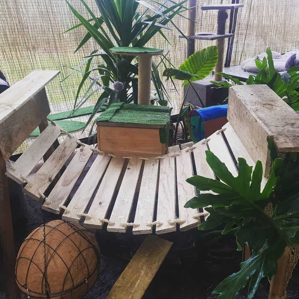 Walkway Catio Ideas -my_bengals_and_pets