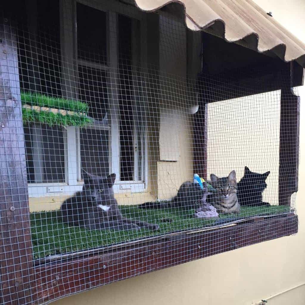 Window Catio Ideas -aruba_cats