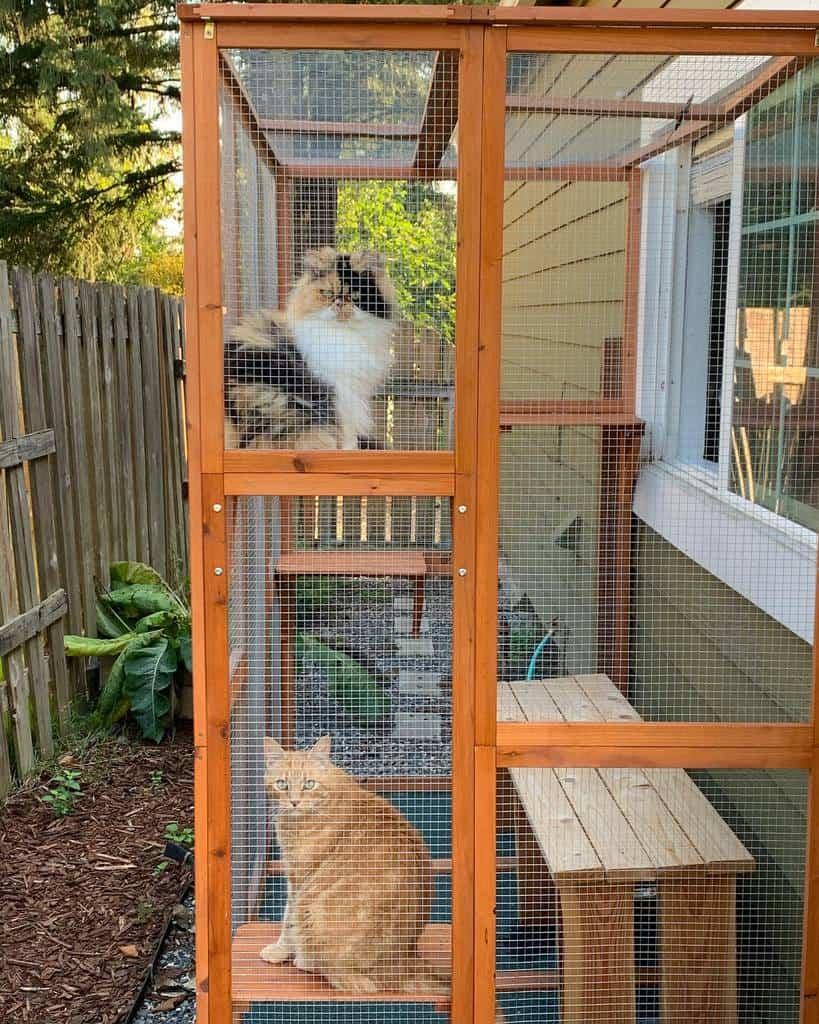 Window Catio Ideas -daphnedawn_thecat