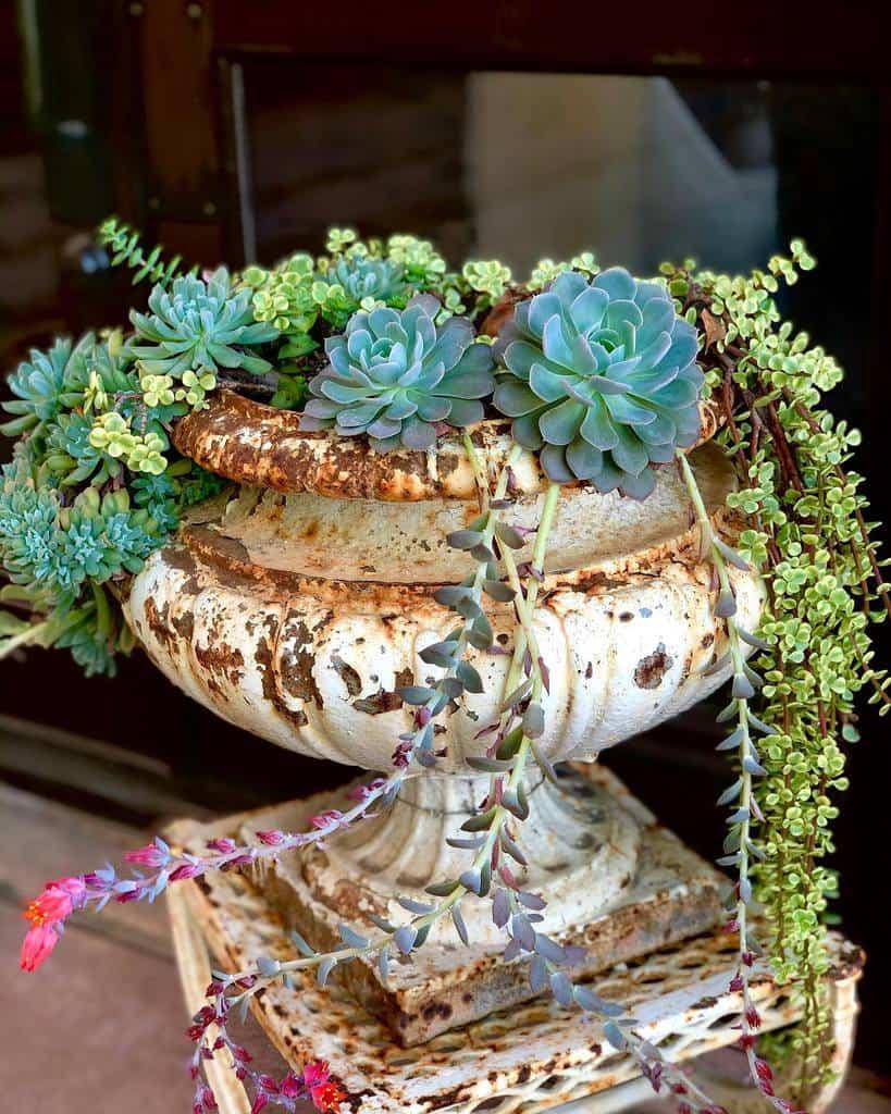 Creative Succulent Garden Ideas -caclent.travel