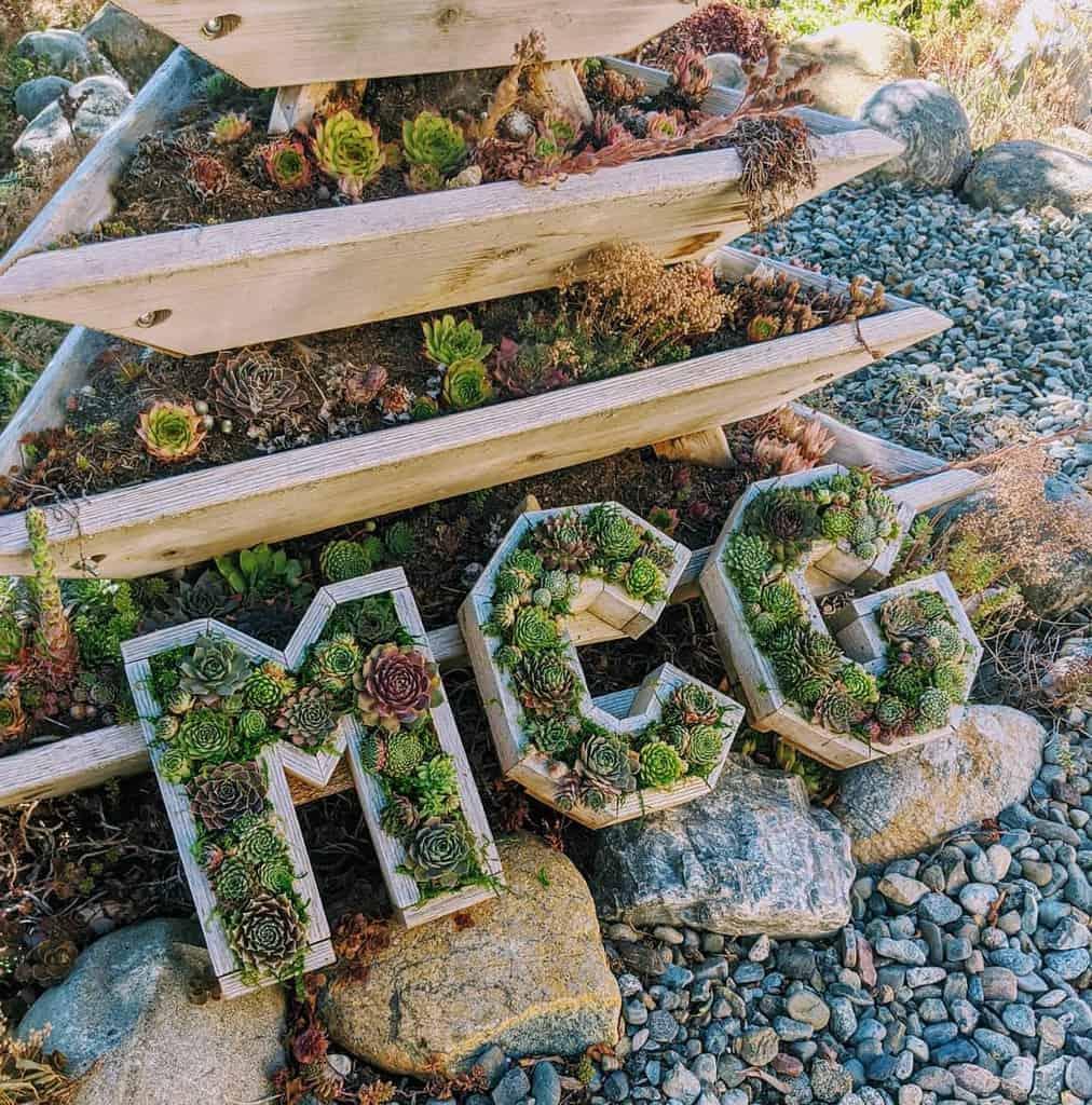 Creative Succulent Garden Ideas -mountaincrestgardens