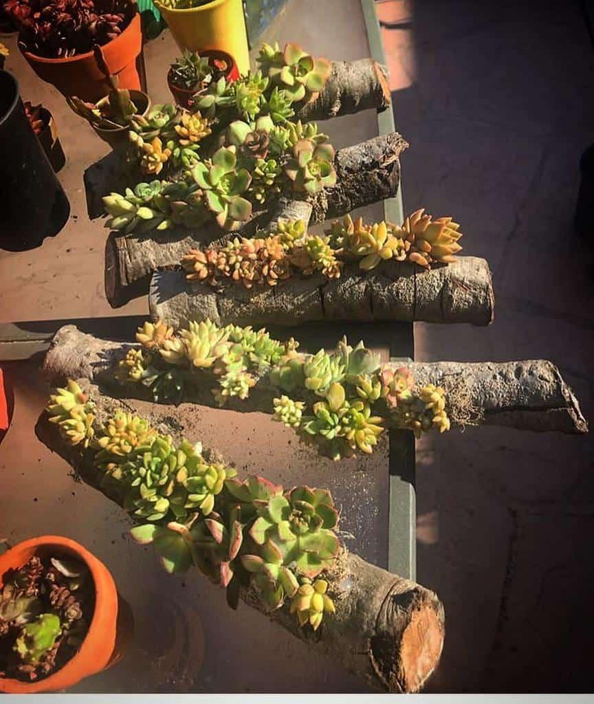 Creative Succulent Garden Ideas -very_loved_plants