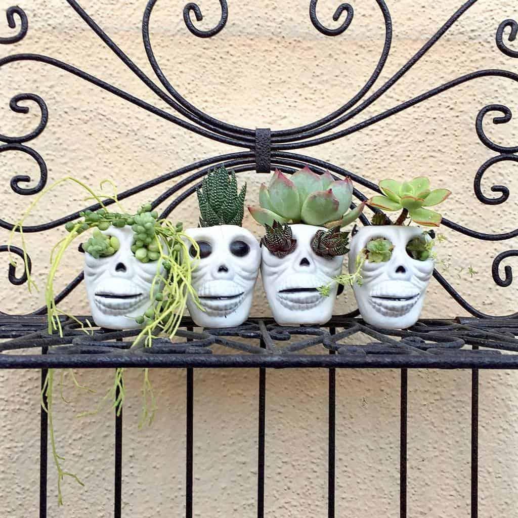 Cute Pots for Succulents Garden Ideas -chiquitasgarden