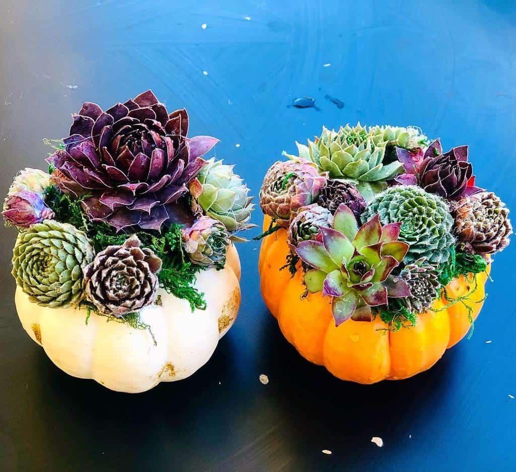 Cute Pots for Succulents Garden Ideas -growing_withplants