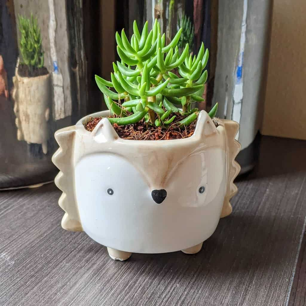 Cute Pots for Succulents Garden Ideas -monasplantaccessories