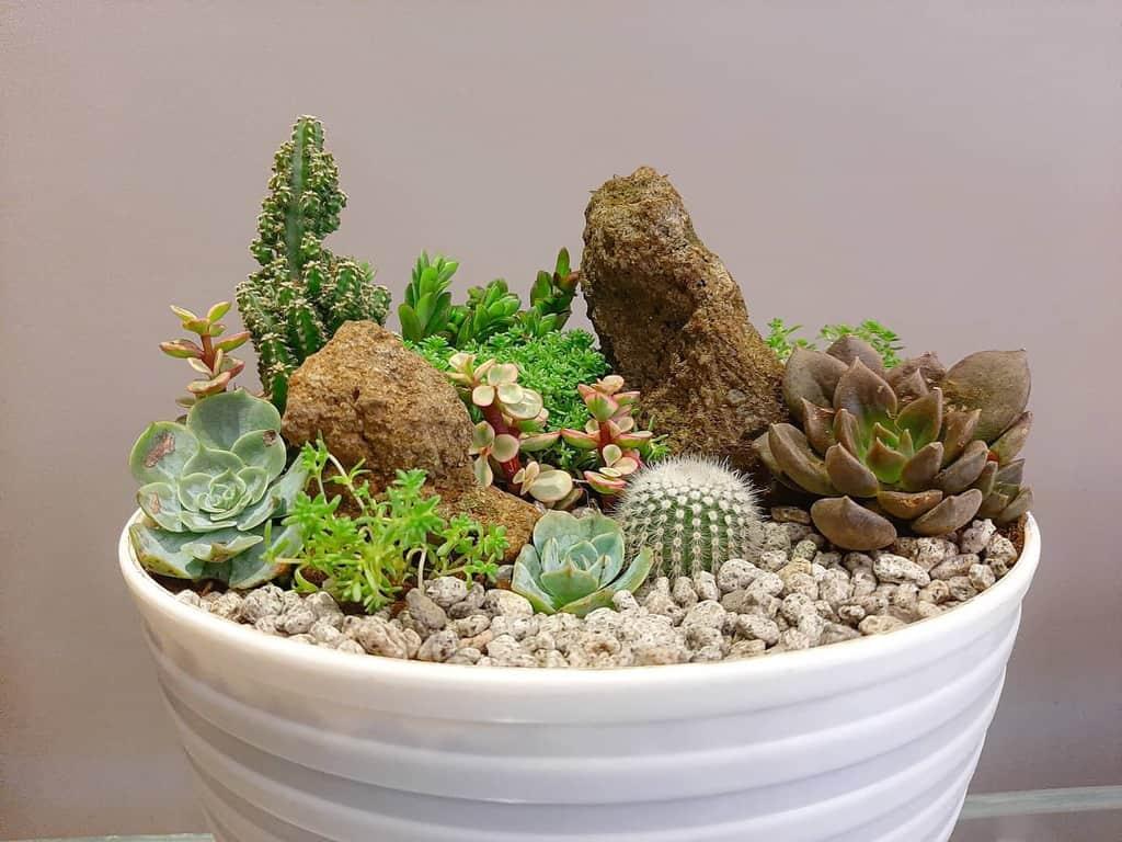 Dish Garden Succulent Garden Ideas -gardennilancelot