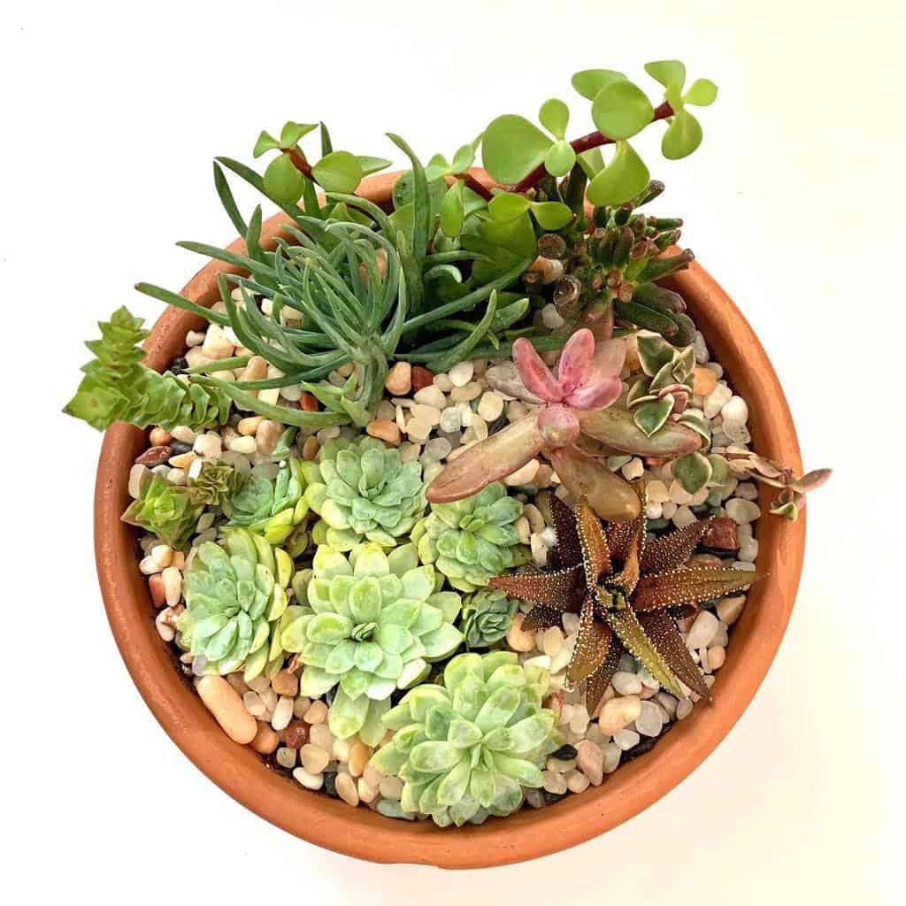 Dish Garden Succulent Garden Ideas -green_september91