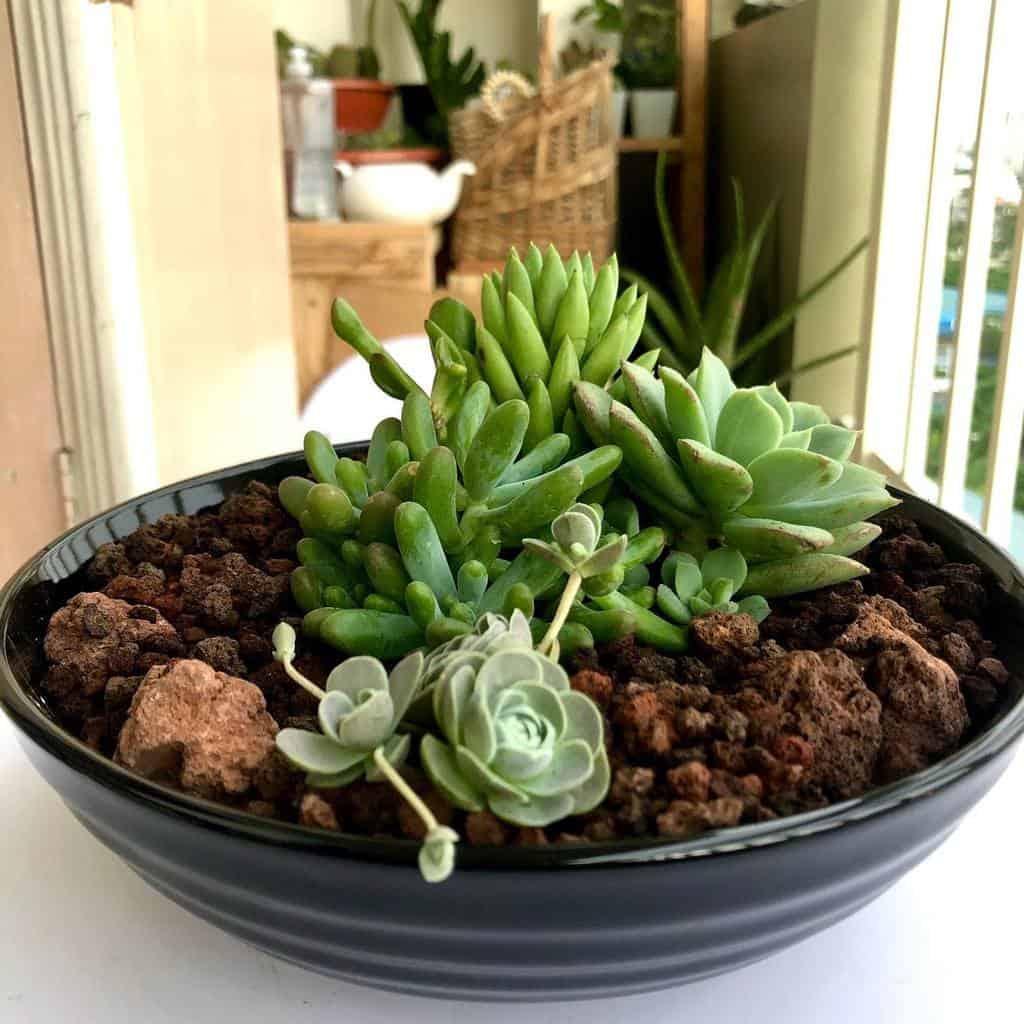 Dish Garden Succulent Garden Ideas -littlelotph