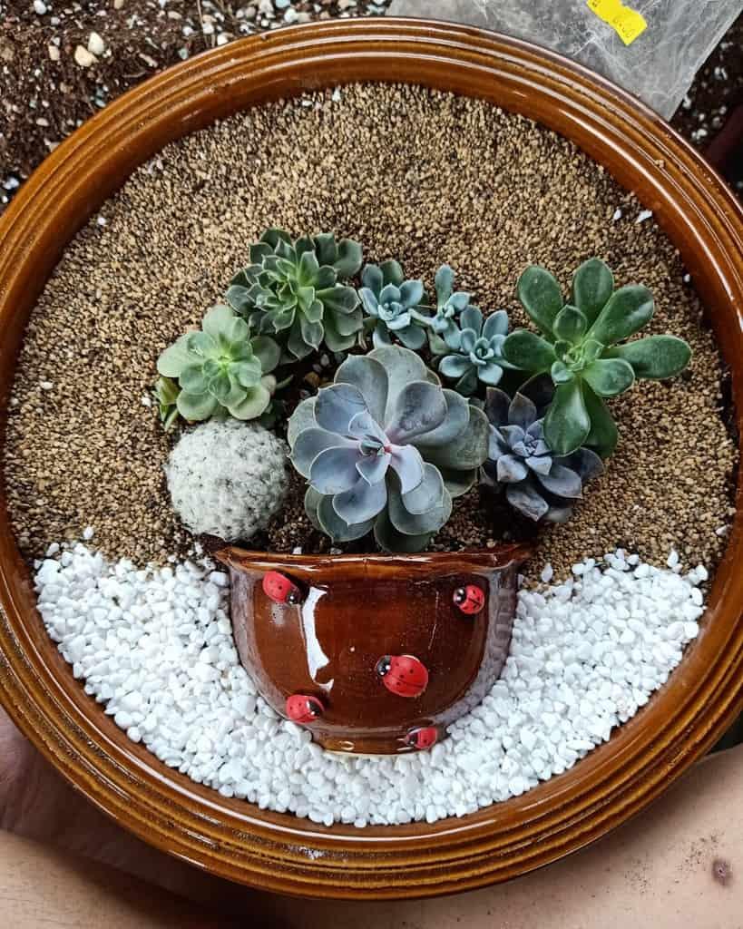 Dish Garden Succulent Garden Ideas -sweetiesucculents.kuching