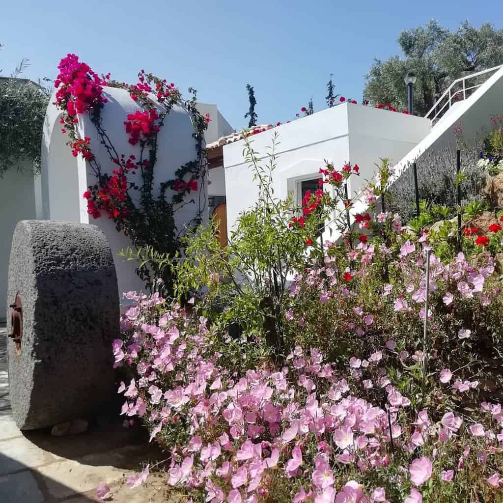 Flowers Xeriscape Ideas -xeriscaping.gr