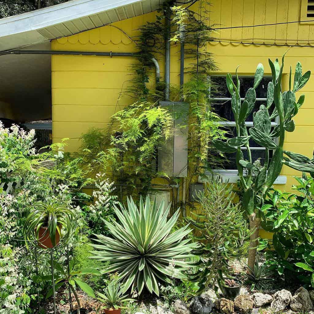Frontyard Xeriscape Ideas -floridafatplants