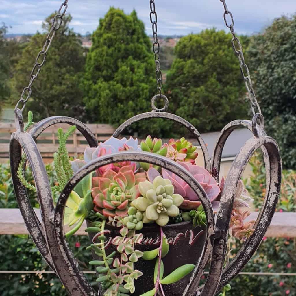 Hanging Succulent Garden Ideas -gardensofv